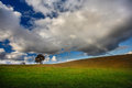 Landscape field tree clouds Royalty Free Stock Images