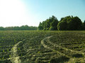 The landscape in the fields of the Kaluga region in Russia. Royalty Free Stock Photo