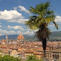 Landscape of florence view with palm tree at foreground piazzale michelangelo Stock Photo