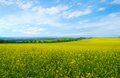 Landscape with flowering fields summer blooming yellow Stock Photos