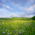 Landscape with flowers Royalty Free Stock Images