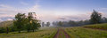 Landscape with fog in mountains and rows of trees in morning Royalty Free Stock Photo