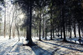 Landscape in a forest in the early winter Royalty Free Stock Photo