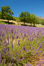 Landscape french luberon in with mountains and lavender Stock Photos