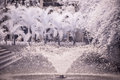 Landscape garden tree and grass infra red photo a Royalty Free Stock Image