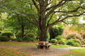 Bench around tree in park at fall Royalty Free Stock Photo
