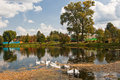 Landscape with geese Stock Image