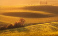 Landscape with green fields, trees, and flowers at colorful sunset Royalty Free Stock Photo