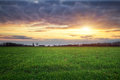Landscape with green meadow and sun sunset composition of nature Royalty Free Stock Image