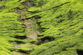 Landscape of green tea plantations. Munnar, India Stock Photos