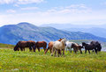 Landscape with  herd of horses Royalty Free Stock Image