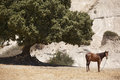 Landscape with horse and tree in Crete. Greece