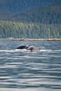 Landscape and humpback whale tail watching adventure from juneau alaska marine life Stock Photo