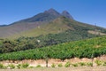 Landscape image of a vineyard, Stellenbosch, South Africa. Royalty Free Stock Photo