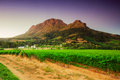 Landscape image of a vineyard stellenbosch south africa vineyards wine region with bleautiful sky at sunset Royalty Free Stock Image