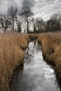 Landscape image of Winter wetlands swamp area Royalty Free Stock Photos