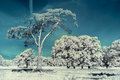 Landscape in the infrared meadow with beautiful largest trees Royalty Free Stock Photos
