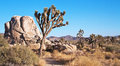 Landscape of Joshua Trees and Rocks Stock Photo