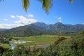 Landscape of Kauai with Taro Fields Royalty Free Stock Photo