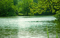 Landscape of lake and trees green at spring Stock Image