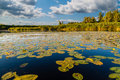 Landscape at the lake with water lilies Royalty Free Stock Photo