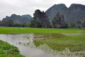 Landscape with limestone towers and rice fields ninh binh vietnam Stock Photography