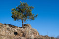 Landscape with a lonely pine tree on the cliff rock against blue sky in crimea Stock Photography