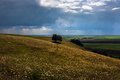 Landscape with a lonely tree on slope against thunder storm Royalty Free Stock Photography