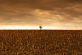 Landscape lonely tree tranquil scene agriculture field Stock Photography