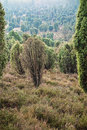 Landscape in the lueneburger heide germany Royalty Free Stock Images