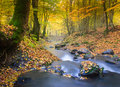 Landscape magic river in autumn forest. Royalty Free Stock Photo