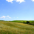Landscape meadow full flowers green hills Stock Images
