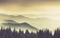 Landscape of misty mountain in forests hills. Royalty Free Stock Photo