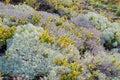 Landscape Of Moss