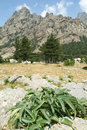 Landscape of mount bavella on the island of corsica france Stock Images