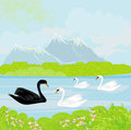 Landscape with mountains and swans on the lake vector Royalty Free Stock Photo