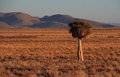 Landscape Namaqualand Northern Cape Province of South Africa Royalty Free Stock Photo