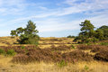 Landscape in National Park Hoge Veluwe in the Netherlands. Royalty Free Stock Photo