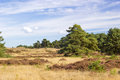 Landscape in National Park Hoge Veluwe, Netherlands. Royalty Free Stock Photo