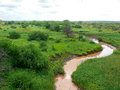 Landscape nature meandering river trees around muddy clay water in the africa kenya Royalty Free Stock Images
