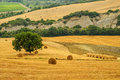 Landscape near seggiano grosseto tuscany italy summer hills fields Royalty Free Stock Photos