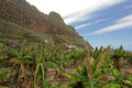 Landscape near Vallehermoso Royalty Free Stock Photo
