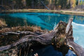 Landscape with old stump and blue lake. Altay Mountains. Russia. Royalty Free Stock Photo