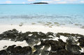 Landscape of one foot island in aitutaki lagoon cook islands black volcanic line rock on Stock Image