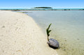 Landscape of one foot island in aitutaki lagoon cook islands coconut is sprouting up on Royalty Free Stock Photo