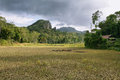 Landscape of paddies and mountains in sulawesi indonesia Stock Images