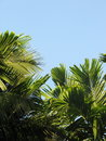 Landscape With Palm Trees Of S...