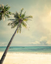 Landscape of palm trees at tropical beach coast Royalty Free Stock Photo