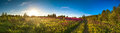 Landscape panorama with the blossoming meadow, sunrise Royalty Free Stock Photo