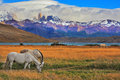 The landscape in the park torres del paine lake laguna azul mountains on shore of lake grazing horses impressive national Royalty Free Stock Image